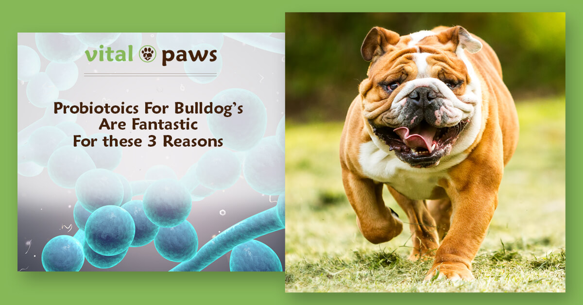 Why are probiotics good for Bulldogs