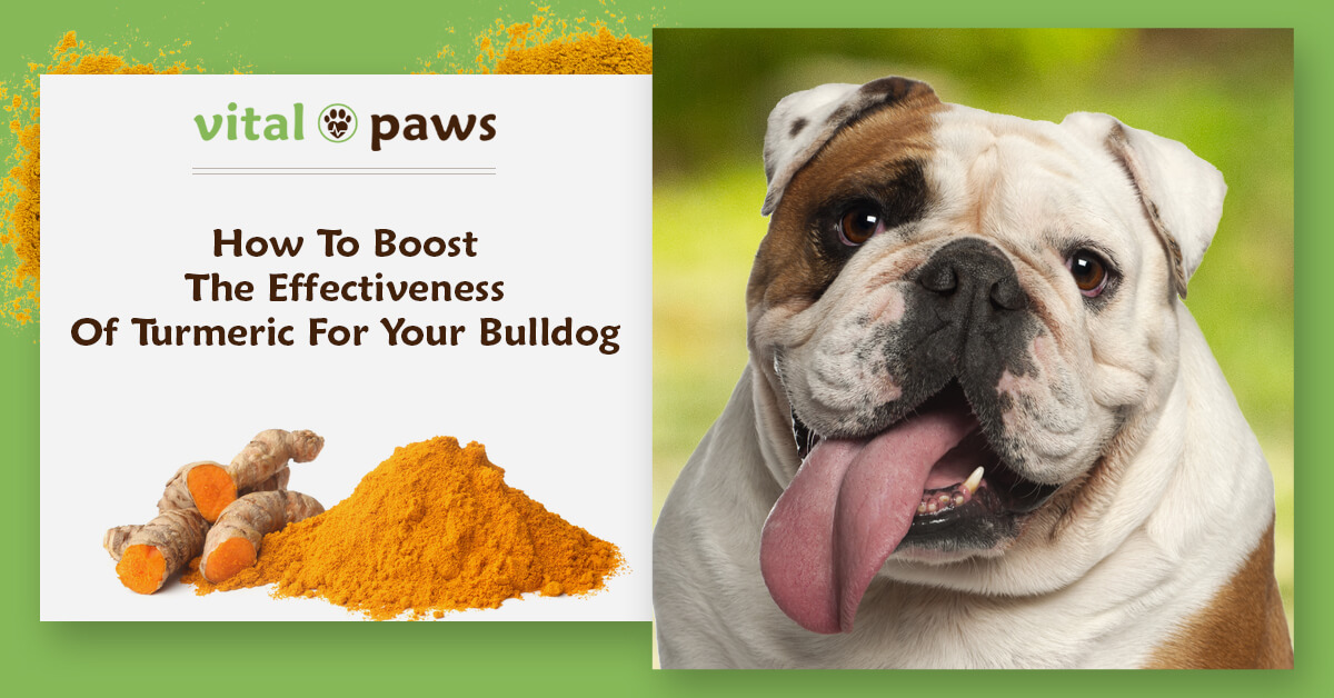 Boost Effectiveness of Turmeric For Bulldogs